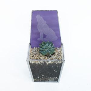 SmallPurpleWolfTerrarium-1